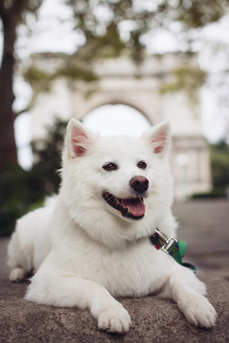 dog at engagement shoot